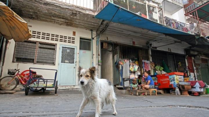 В Башкирии за укушенного собакой ребёнка суд обязал выплатить 20 тысяч рублей