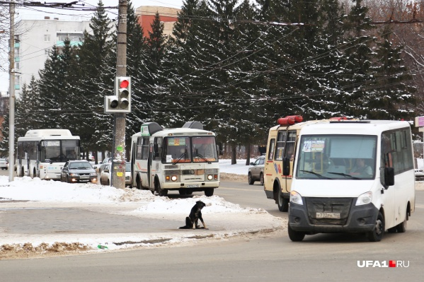 Новые автобусы должны выйти в рейсы до конца следующего года