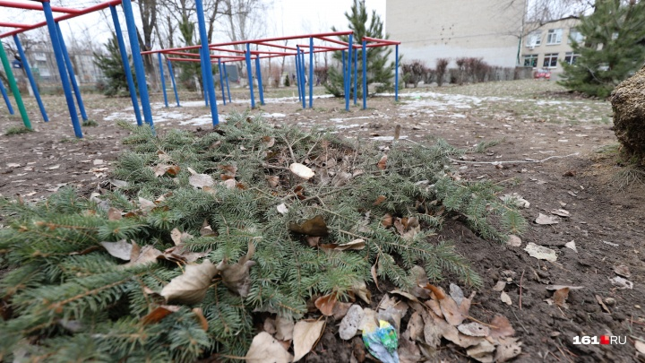 Срубили нашу елочку: в ростовской школе со двора украли дерево, посаженное детьми