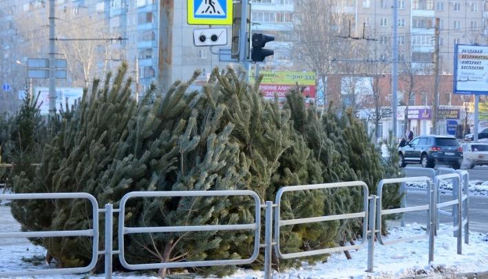 В Челябинске станет меньше ёлочных базаров.Когда и сколько в этом году откроют точек продажи