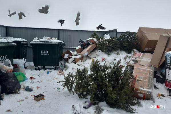 По словам губернатора, к концу января самая сложная обстановка с вывозом мусора сложилась в Котласе, Коряжме и в Виноградовском районе