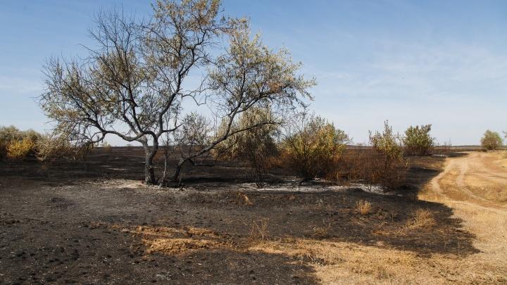 Тушат больше двух часов: сильный ветер раздувает крупный пожар в Волгоградской области