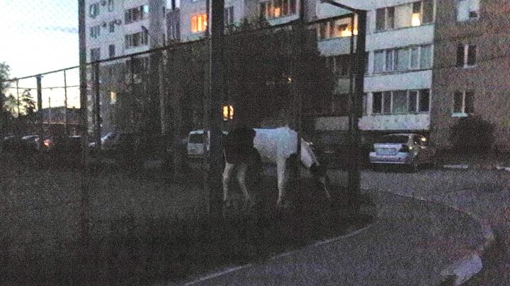 «Детям нравится такая экзотика»: омичка рассказала, почему гуляет с лошадью на детской площадке