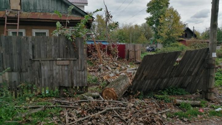 «Был забор, стал проходной двор». На дом и участок инвалида из Ярославля свалился огромный тополь