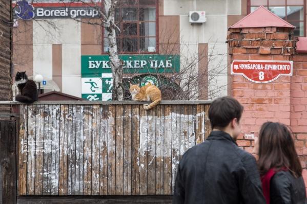 Множество рекламы и пластика, которым обшивают дома, лишает Архангельск красоты