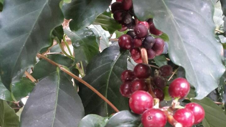 В школе «Северного» в теплице выращивают кофе и ведут переговоры по разрешению конфликтов