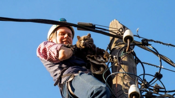 Человек с котом в мешке: как преподаватель УрФУ спас 800 чужих кошек и собак
