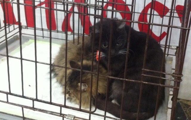 Новосибирцам предлагают забрать домой двадцать симпатичных бездомных кошек