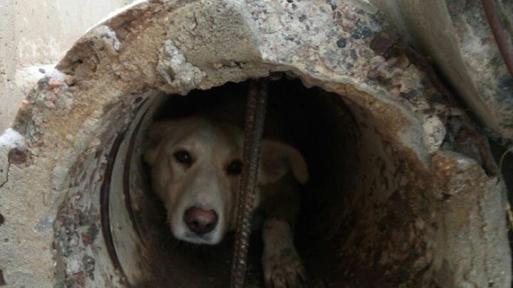 Жители одного из башкирских городов спасли собаку из заточения