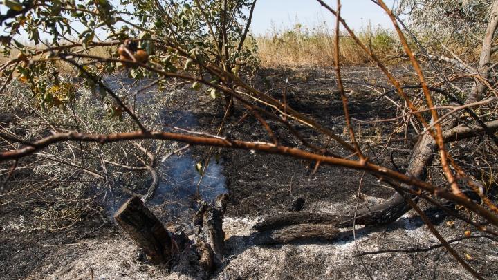 В Волгоградской области локализовали огромный степной пожар