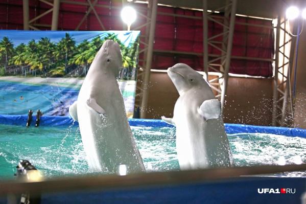Дельфинов в Уфе хотят использовать как лекарство