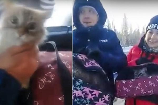 Семья вместе со своими питомцами ехала к родным в Минусинск на Новый год