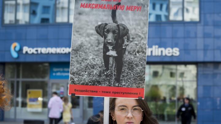 Новосибирца отправят под суд за убийство собаки Шанти в лифте дома в «Матрёшкином дворе»