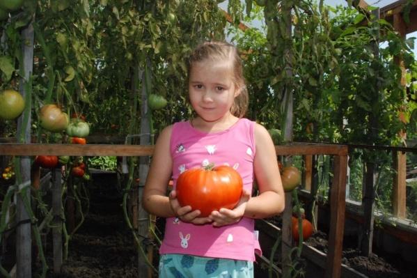 Победителями обычно становятся дачники, вырастившие плод в 1,6–1,7 килограмма