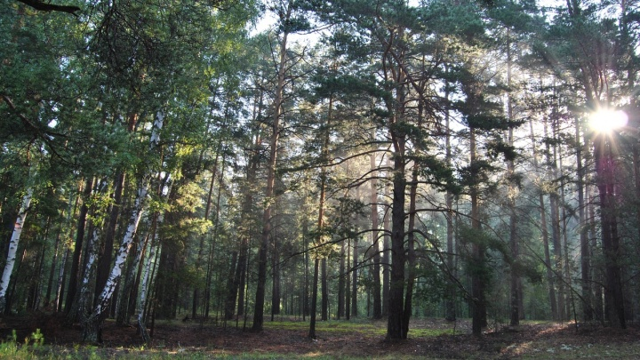 В Кургане спасатели отыскали заблудившегося в лесу мужчину: помог звук сирены