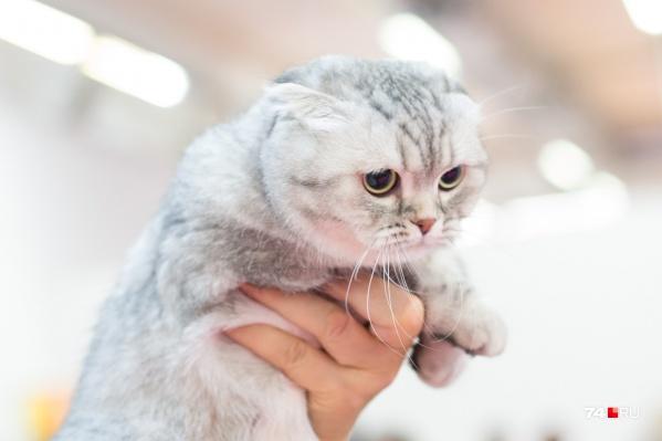 Плохое настроение из-за дождя? Срочно бегите гладить котиков!