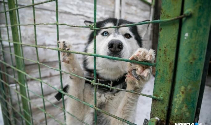 Отлов бездомных животных доверили минэкологии и выделили 41 миллион
