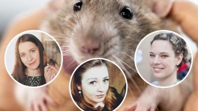 «Это пушистые антидепрессанты!» Истории трёх челябинок, для которых крысы стали домашними любимцами