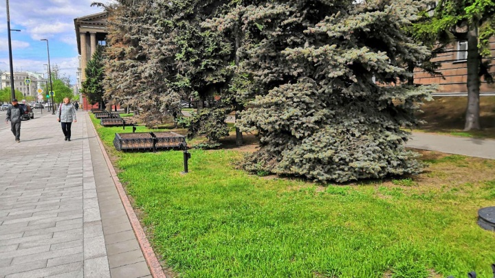 Специалисты обследовали больные деревья у здания правительства и назвали причины их увядания