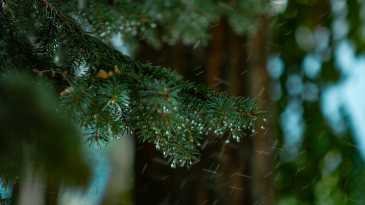 Тепло и дождливо: какая погода ждет Ростов на этой неделе