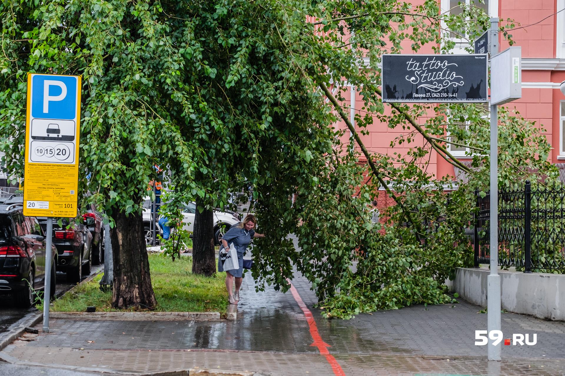 Ходить мимо таких деревьев опасно