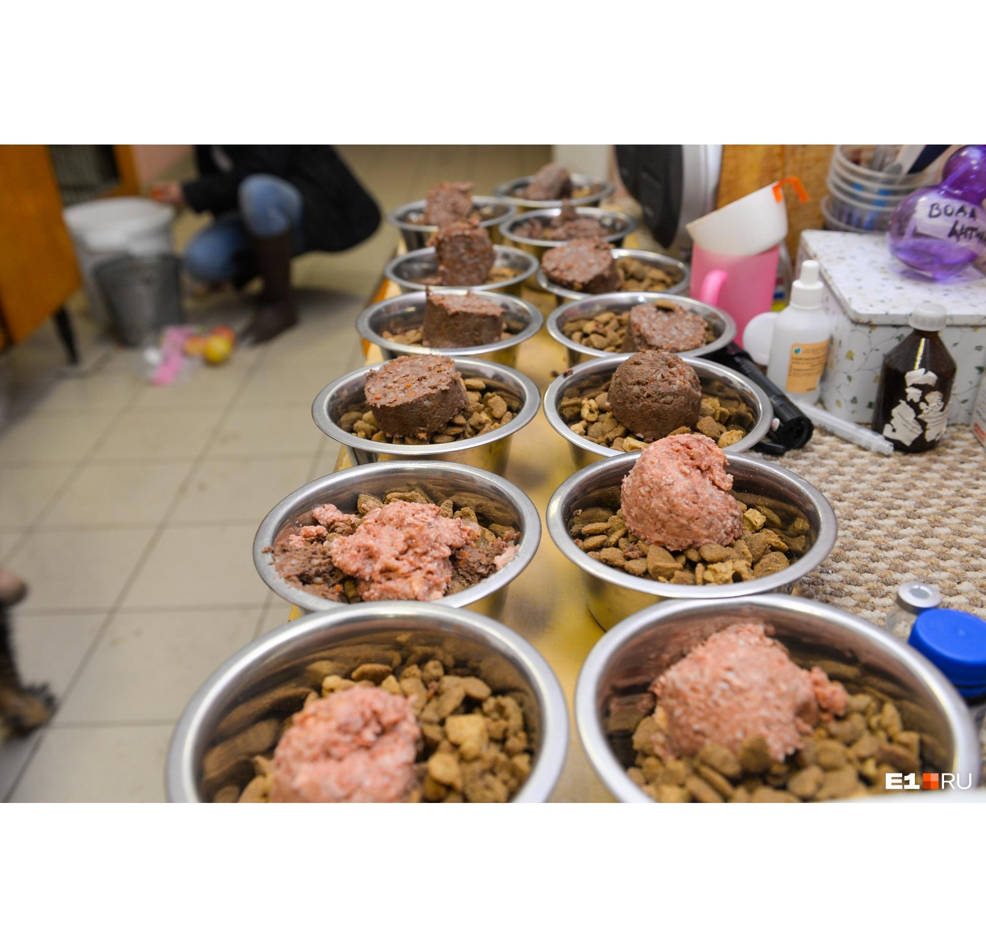 Ужин для собак — подопечных Центра реабилитации животных