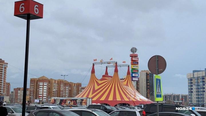 Прокуратура отчиталась о проверке цирка у «Планеты» за несколько дней до его отъезда