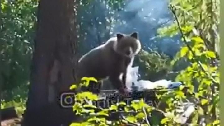 Отдыхающие сняли на видео разоряющего лагерь наглого медведя