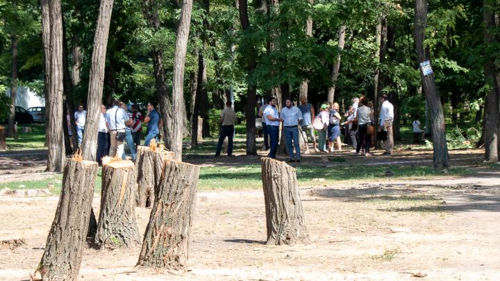 В Ростове в парке «Осенний» высадят тысячу новых деревьев