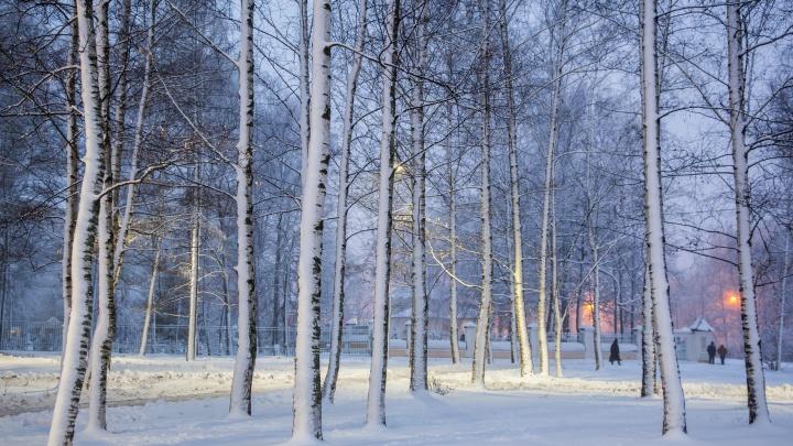 «Финал мягкой еврозимы»: в Ярославле ударят морозы. Прогноз
