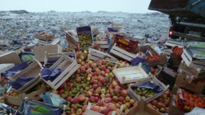Ярославские таможенники уничтожили полтонны заморских яблок и груш и 11 килограммов сыра