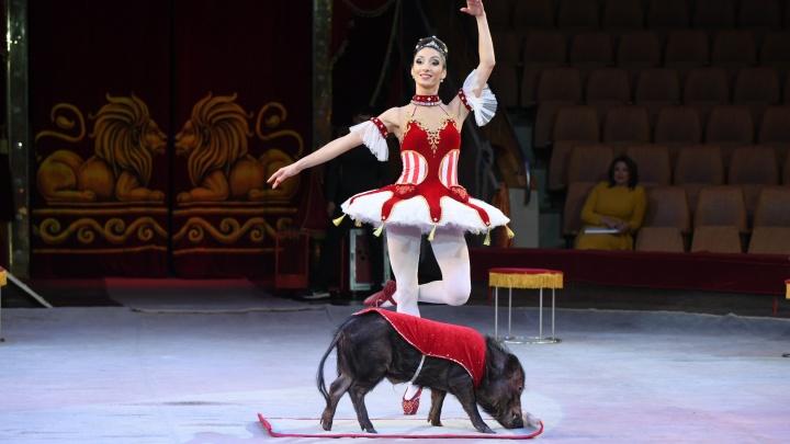 «Удивительно низкая явка зрителей»: Игорь Мороков осудил ценовую политику Екатеринбургского цирка