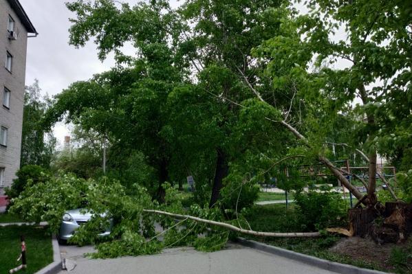 Дерево перегородило проезд во двор