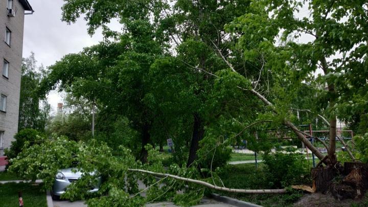 Дерево упало на машину и перегородило проезд во дворы на Дуси Ковальчук