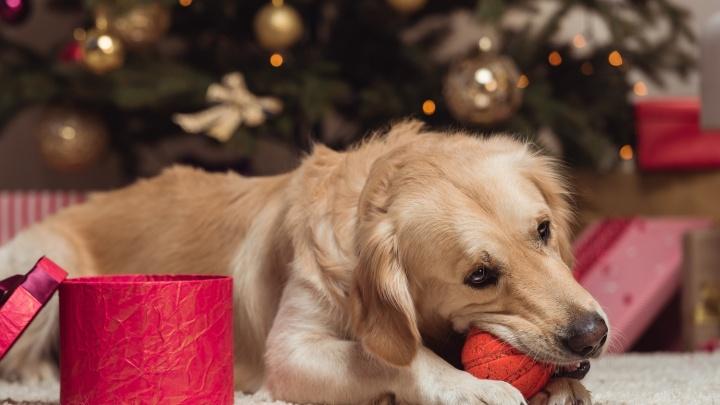 Зоосалоны и ветеринарные сети дали советы, как задобрить символ грядущего года