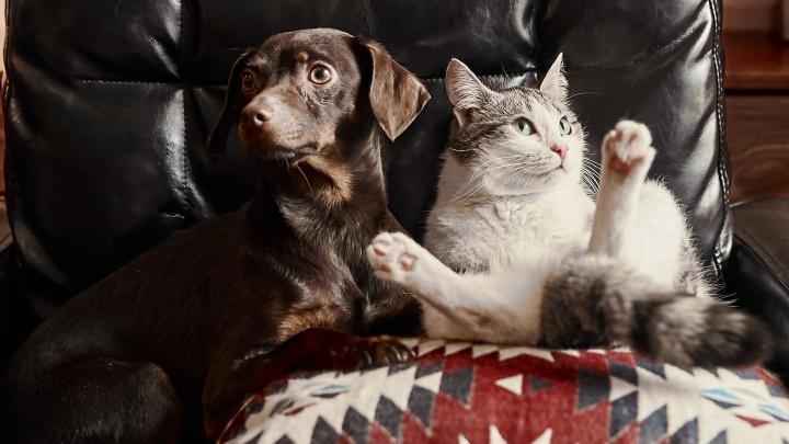 «Облизывают друг другу шерстку и спят рядышком»: история любви кошки Белки и пса Бруно