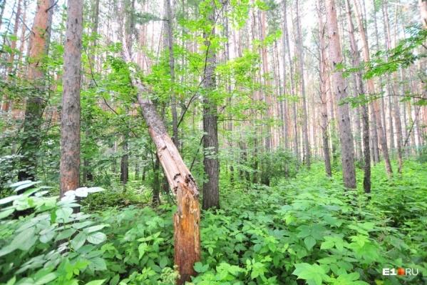 Он заблудился в лесу
