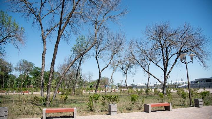 На аллее рядом с «Ростов Ареной» погибли деревья и кустарники