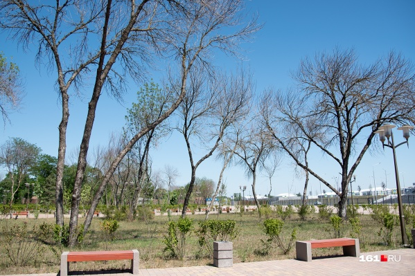 Причиной гибели деревьев стало отсутствие полива