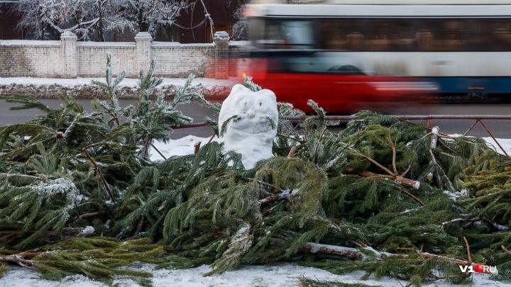 «Остались только ветки да палки»: в Волгограде разбирают заснеженные «кладбища» елок