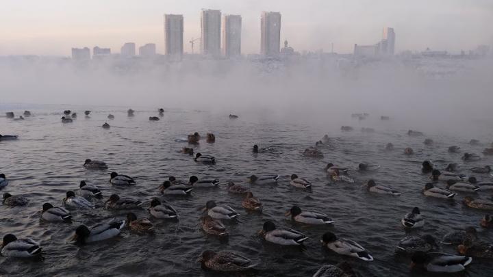 В пятницу Красноярск ждет первый гололед и мокрый снег