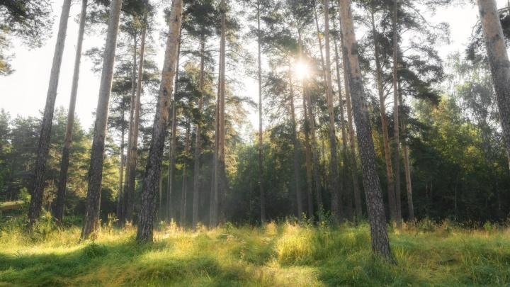 В Балатовском парке пермякам покажут фильм о людях, которые защищают леса от застройки