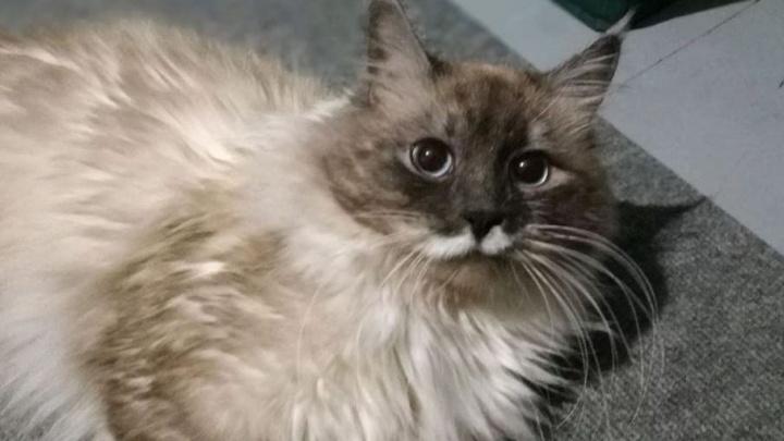 Екатеринбуржец выставил на продажу кота за миллион рублей за то, что тот был недостаточно ласков