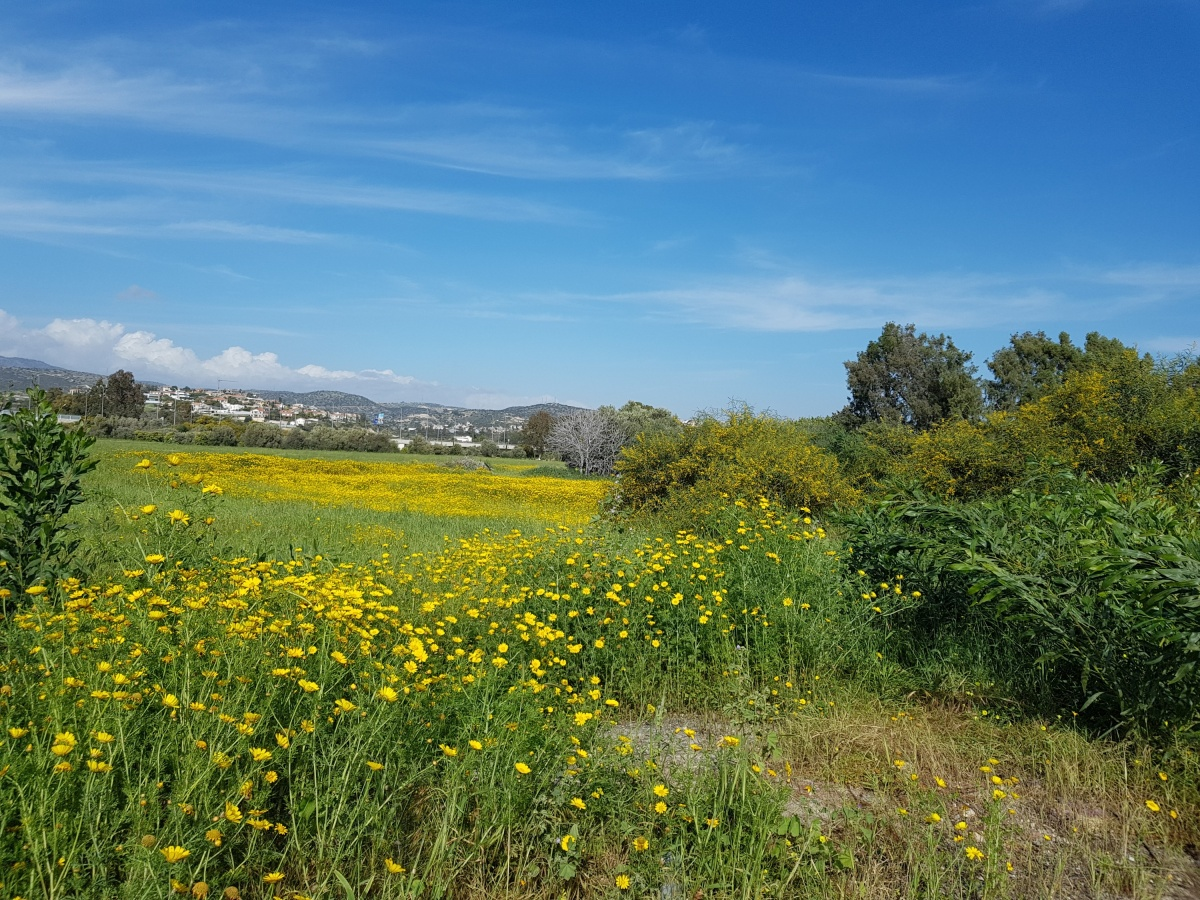 Зеленые луга на Кипре — редкость