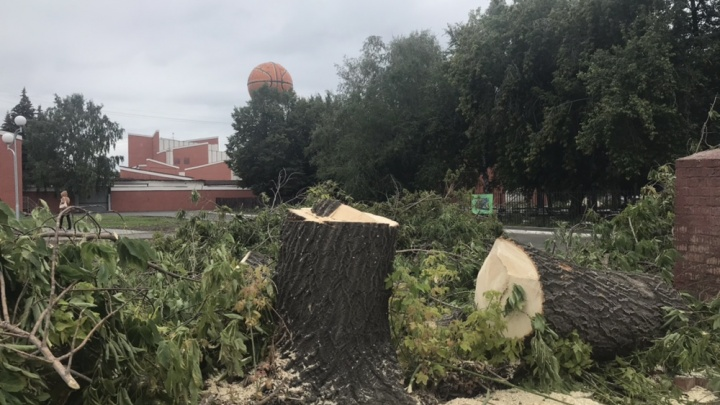 Лысое поле: в центральном сквере Челябинска начали вырубку деревьев