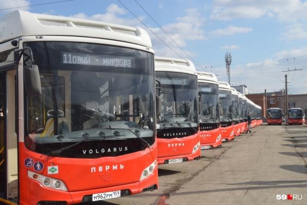 Сейчас в Перми работает 75 новых автобусов