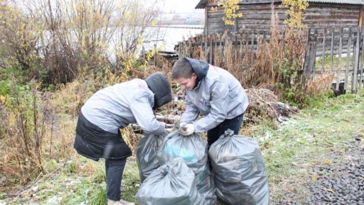 «Администрация не была проинформирована»: почему не вывезли мусор в поселке Динамо после акции ОНФ?