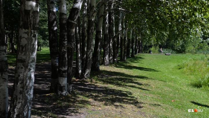 В Екатеринбурге началось голосование за место для новой аллеи с 63 деревьями