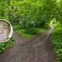 В лесу микрорайона Южного ищут дедушку, который ушёл за грибами