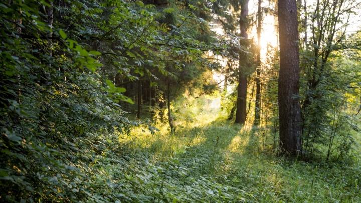 В Ярославской области чиновники собрались на природе, чтобы сохранить лес